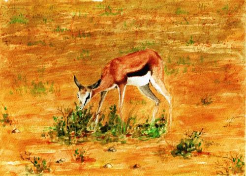 springbok-nouveau-ne